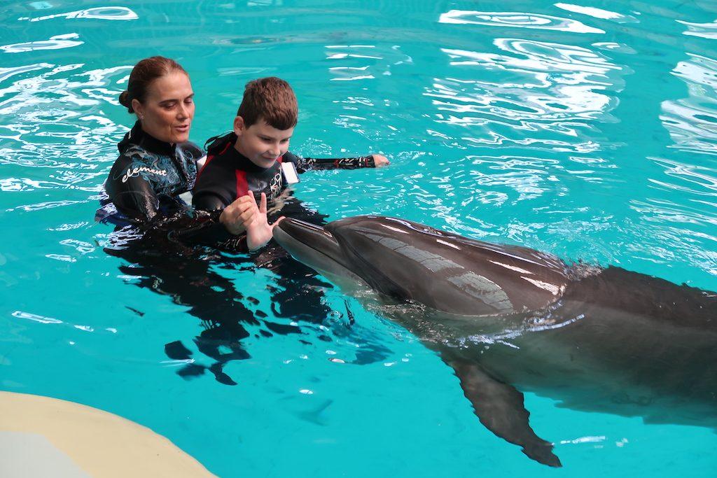 delfinoterapia-delfin-terapia